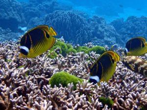 Beautiful Colourful Marine Life